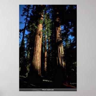 Warm redwoods poster