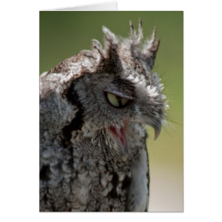 Warning From a Screech Owl note card