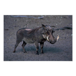 Warthog - Big Boar Poster