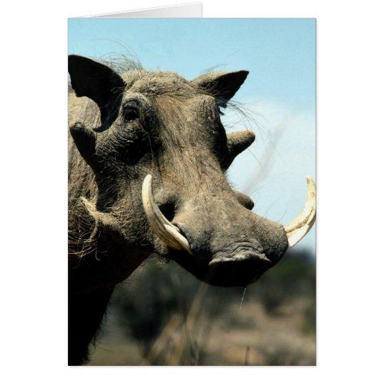 Warthog Close-Up Card