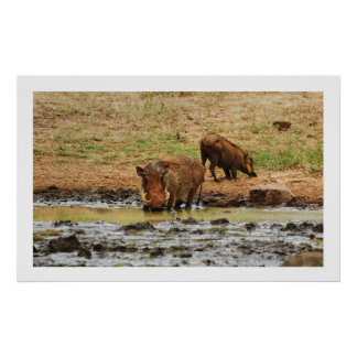 Warthog wallowing posters