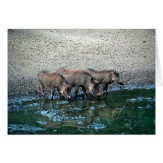 Warthogs Card