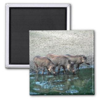 Warthogs Magnet