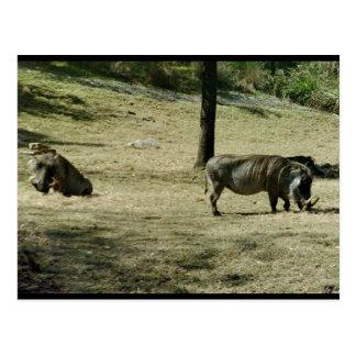 Warthogs Postcard