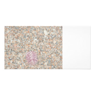 washed crushed shells scallop beach image picture card