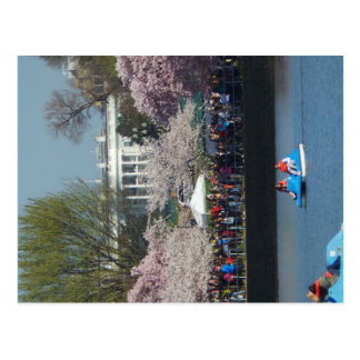 Washington DC 1 Postcard