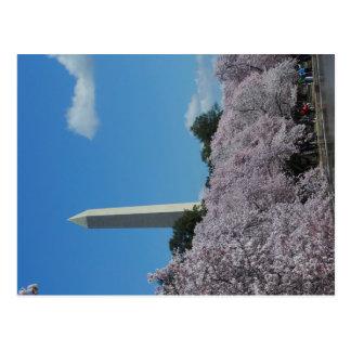 Washington DC Cherry Blossom 2 Postcard