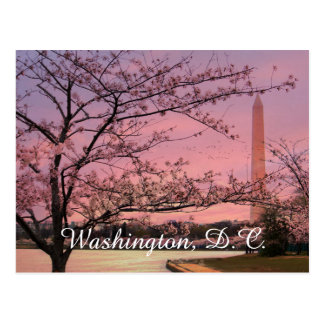Washington Monument Cherry Blossom Festival Postcard
