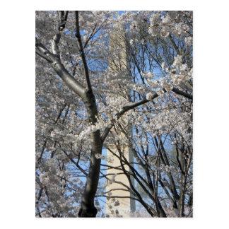 Washington Monument Cherry Trees 001 Postcard