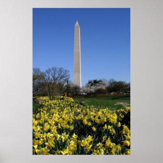 Washington Monument Daffodils Poster
