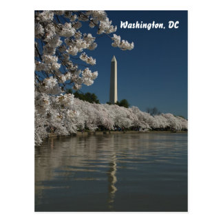 Washington monument in cherry blossoms postcard