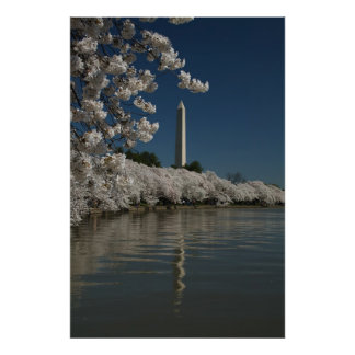 Washington monument in cherry blossoms poster