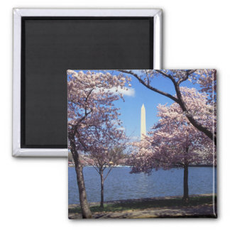 Washington Monument Through Cherry Blossoms Magnets