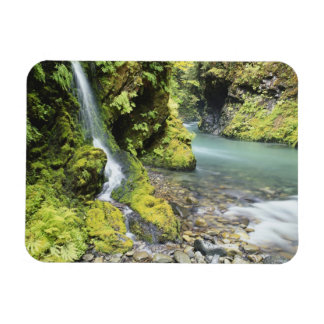 Washington, Olympic National Park, Seasonal Rectangular Photo Magnet