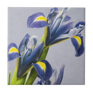 Washington, Redmond, iris pourpres Petit Carreau Carré