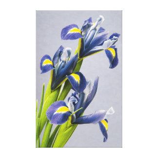 Washington, Redmond, iris pourpres Toile Tendue