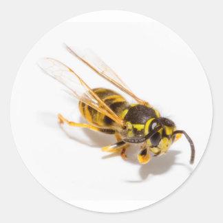 Wasp Classic Round Sticker