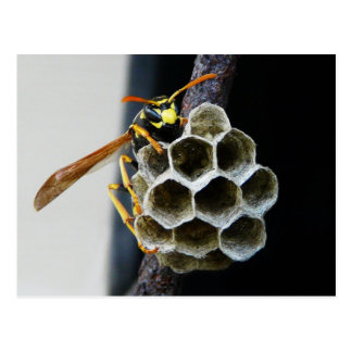 Wasp Nest and Worker Postcard