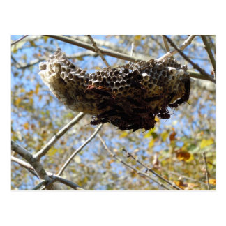 Wasp Nest! Yikes! Postcard