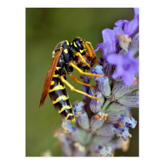 Wasp on lavender flower post card