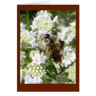 Wasp on Mountain Mint in Prairie Blank Note Card