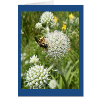 Wasp on Rattlesnake Master Blank Note Card