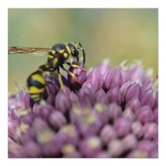 Wasp Poster