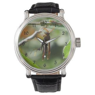 Wasp Watch