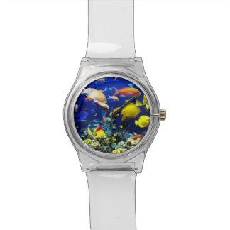 WATCH FISH AQUARIUM