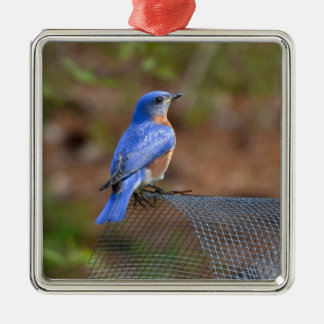 Watch the Bluebird bring Happiness! Silver-Colored Square Ornament