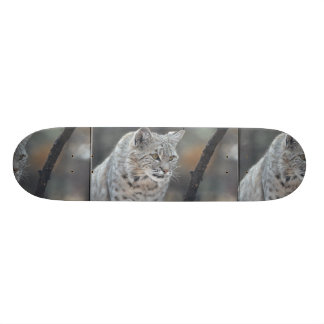 Watchful Bobcat Skateboard