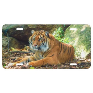 Watchful Tiger License Plate