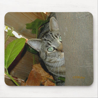 Watching Your Mouse Mouse Pad