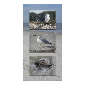 Water creatures triptych poster