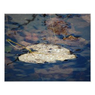 Water Do Leaf Photo Print