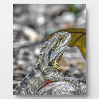 WATER DRAGON AUSTRALIA ART EFFECTS PLAQUE