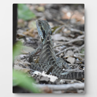WATER DRAGON QUEENSLAND AUSTRALIA PLAQUE