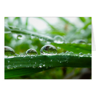 Water droplet on grass leaf card