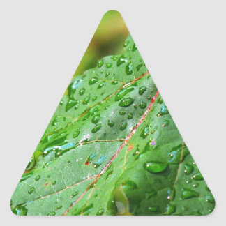 Water Drops on a Green Leaf Triangle Sticker