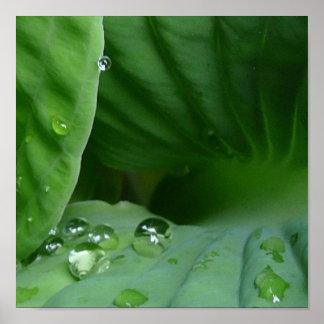 Water Fall ing Poster