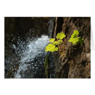 Water Falls Card
