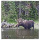 Water Feeding Moose Napkin