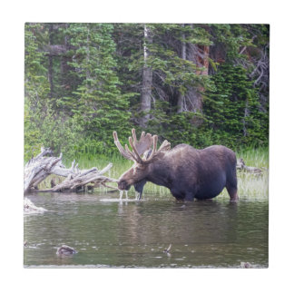 Water Feeding Moose Tile