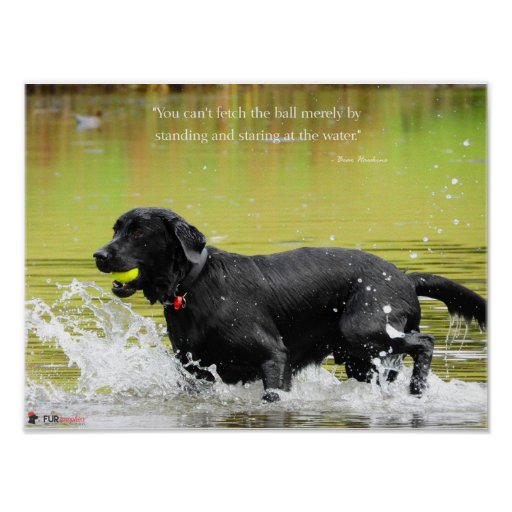 Water Fetch Poster