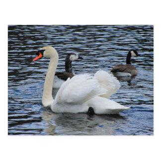 Water Fowl ~ postcard