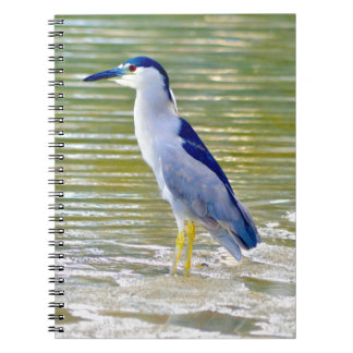 Water Kissed Notebooks