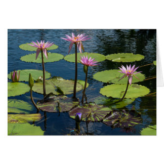 Water Lilies at Forest Park Card
