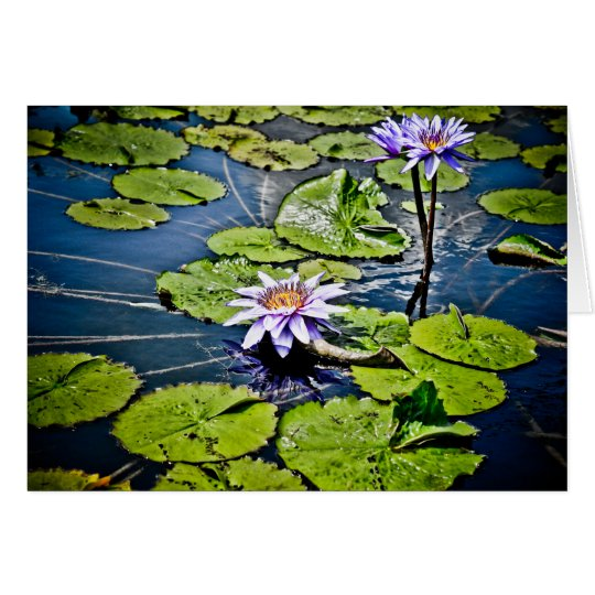 Water Lilies at Jewel Box Card