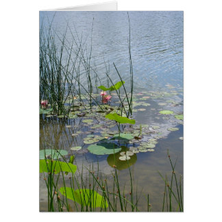 Water Lilies in the Pond Card