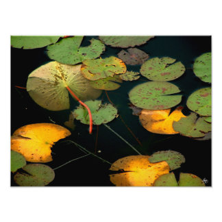 Water Lilies No 1 - Open Edition Print